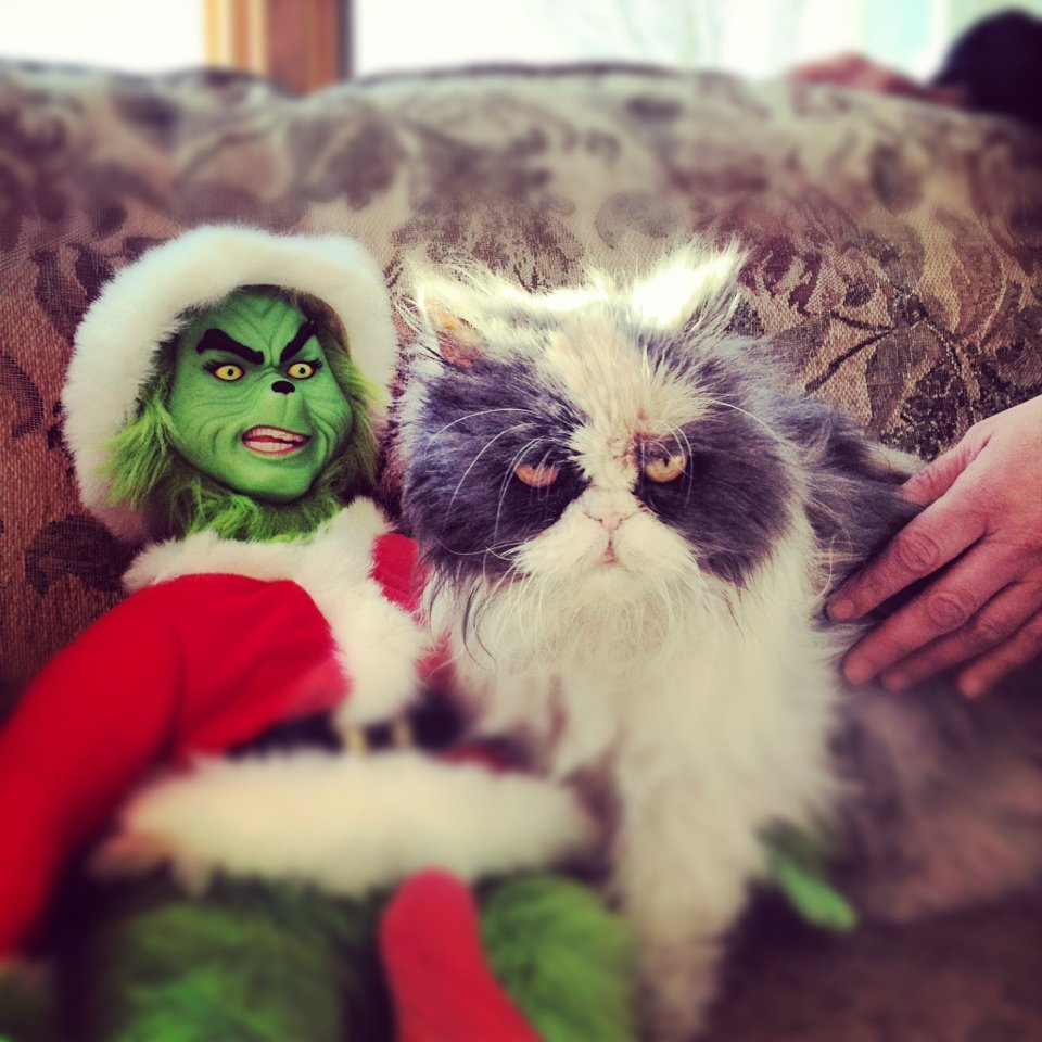 cat with a grinch stuffed animal