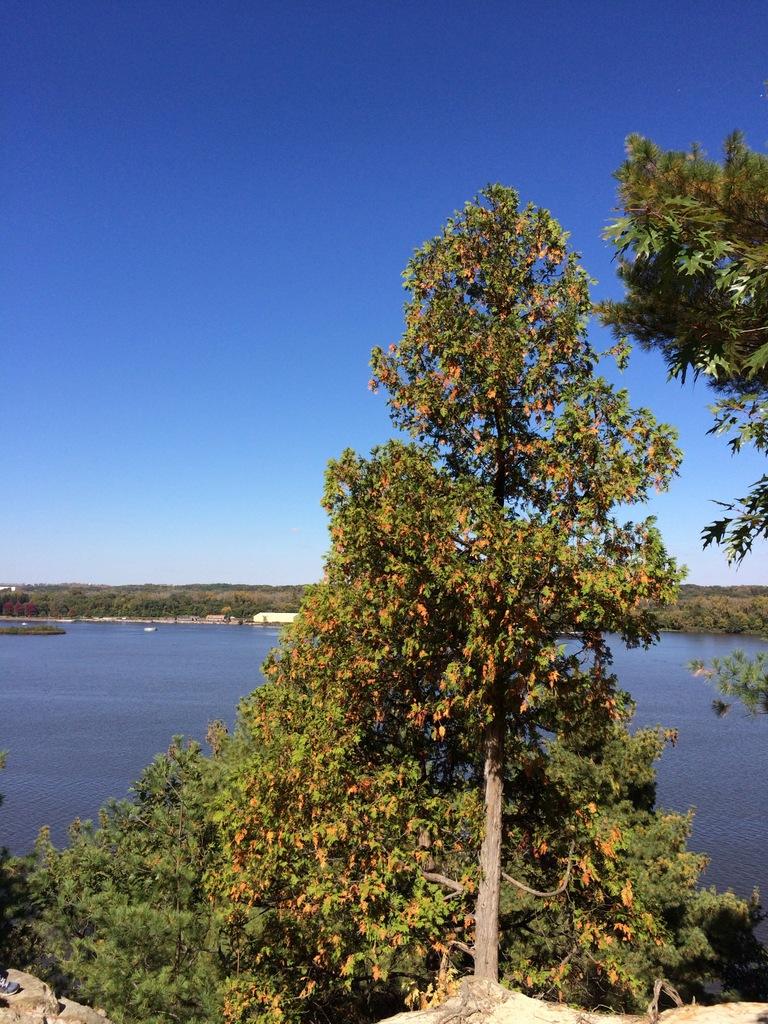 A tree near a lake