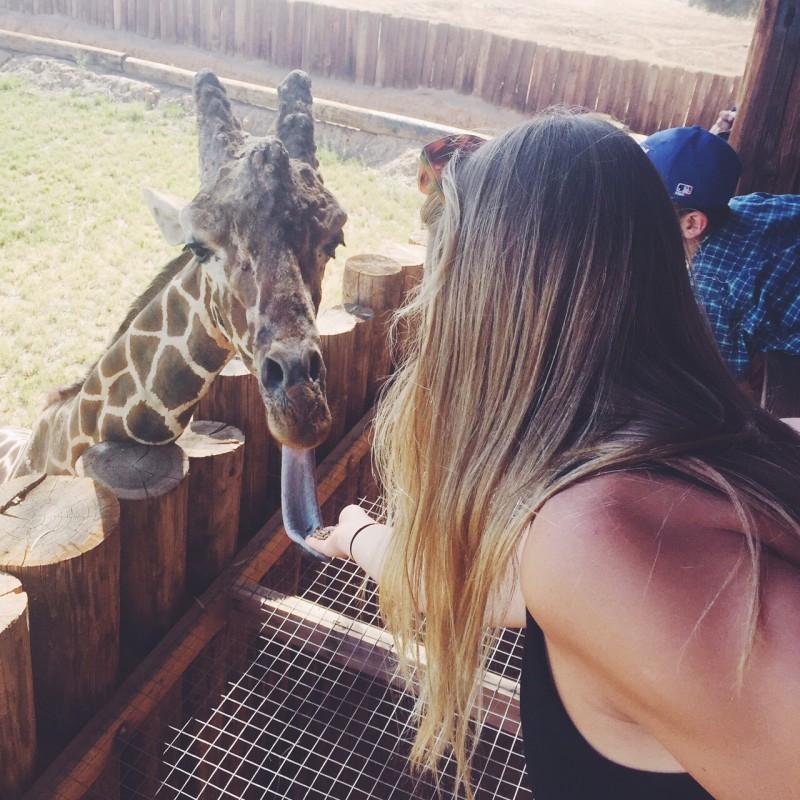 monique feeding a giraffe