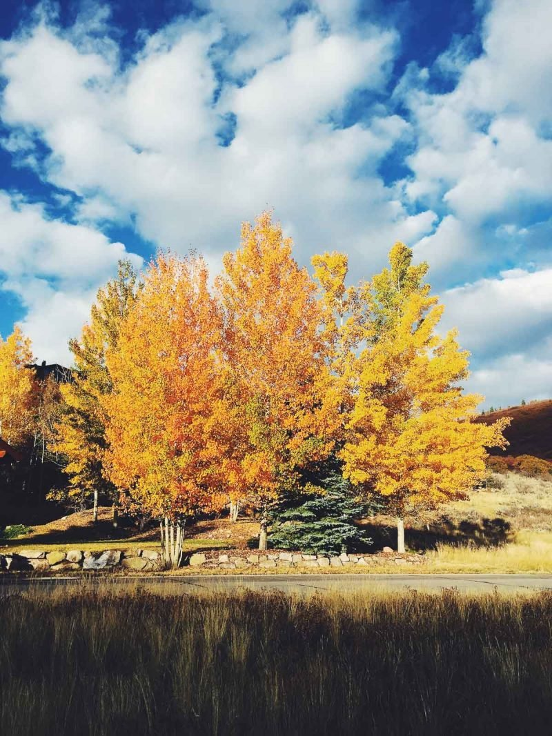 fall trees in park city, utah