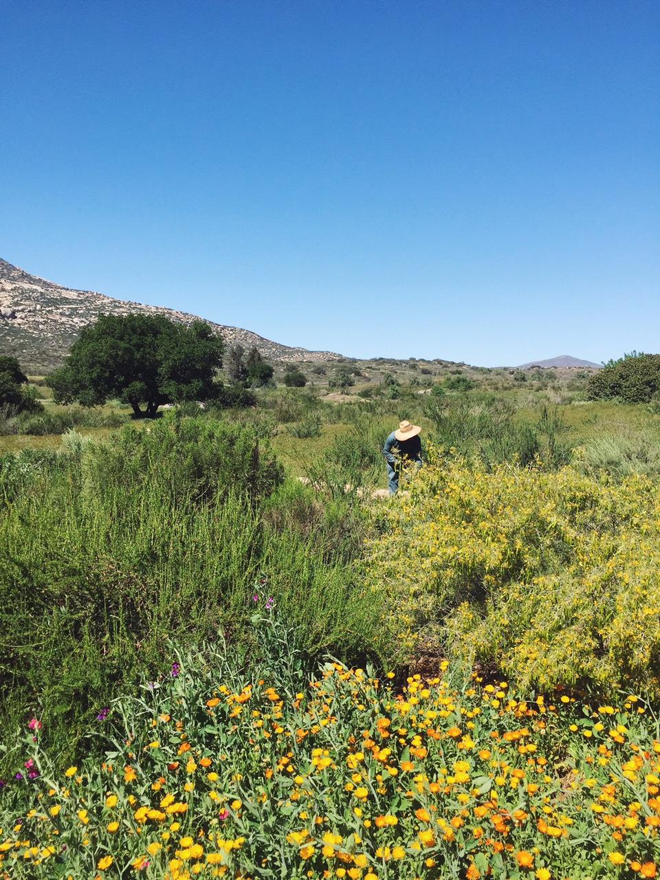 field in rancho la puerta
