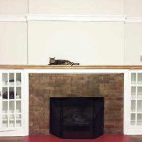 cat on a mantel