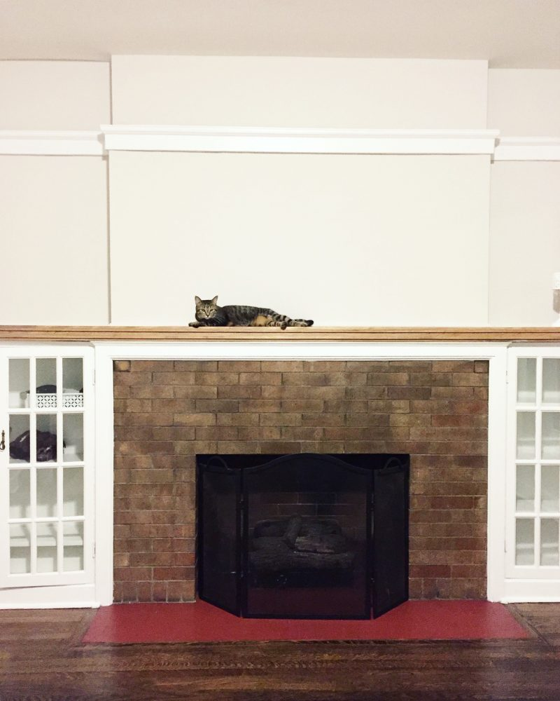 cat on a mantle over a fireplace