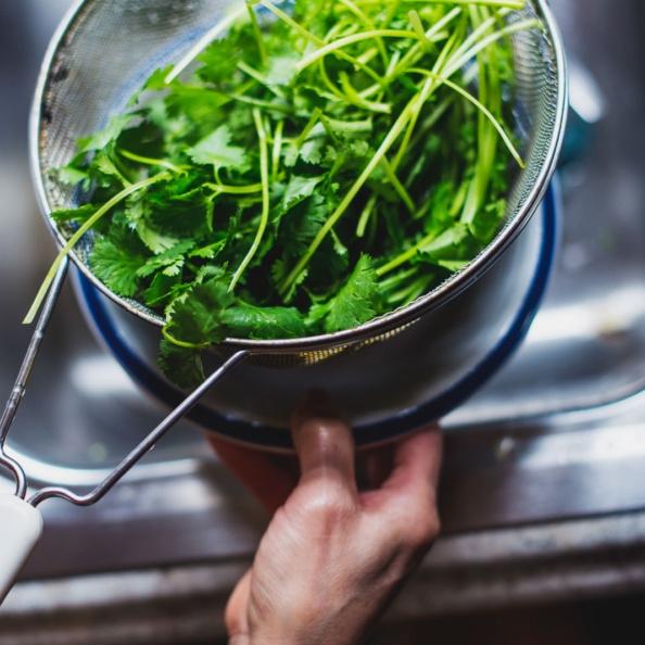 rinsing cilantro