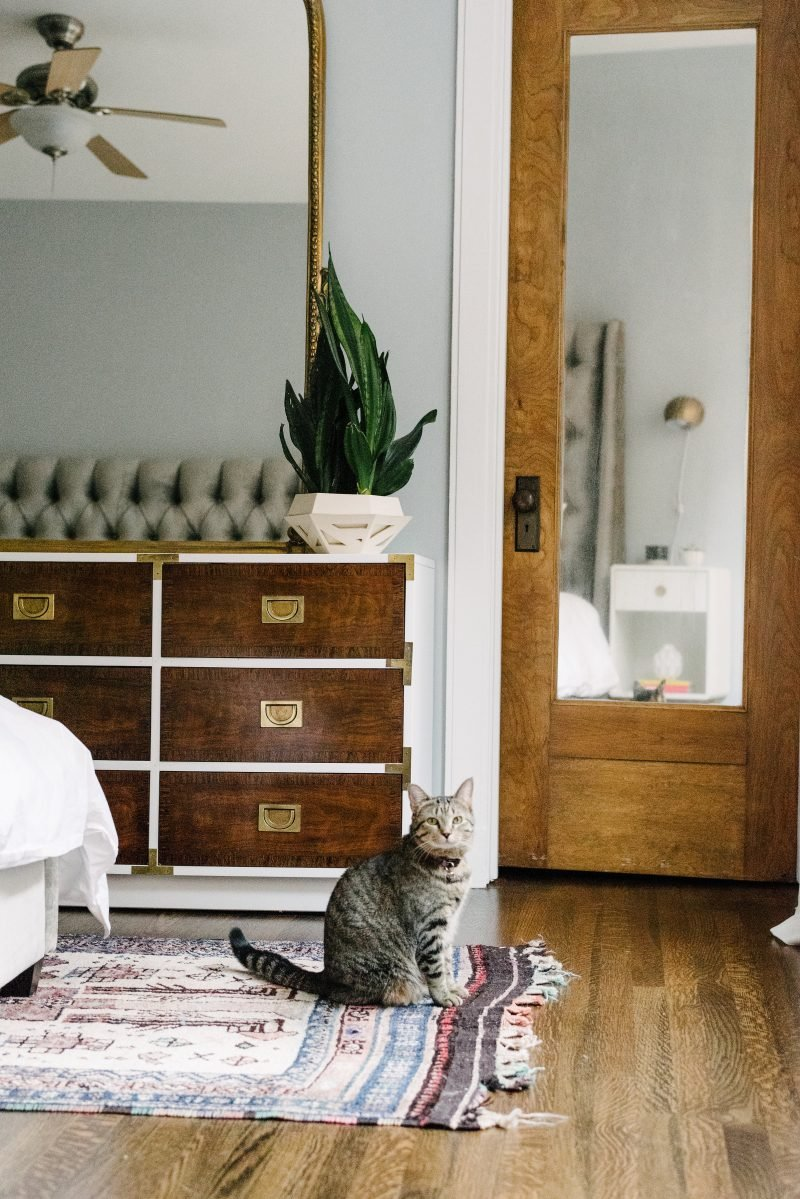 cat sitting on a rug in a master bedroom