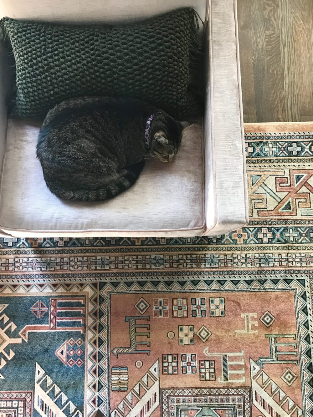 a cat sitting on a chair on top of a rug