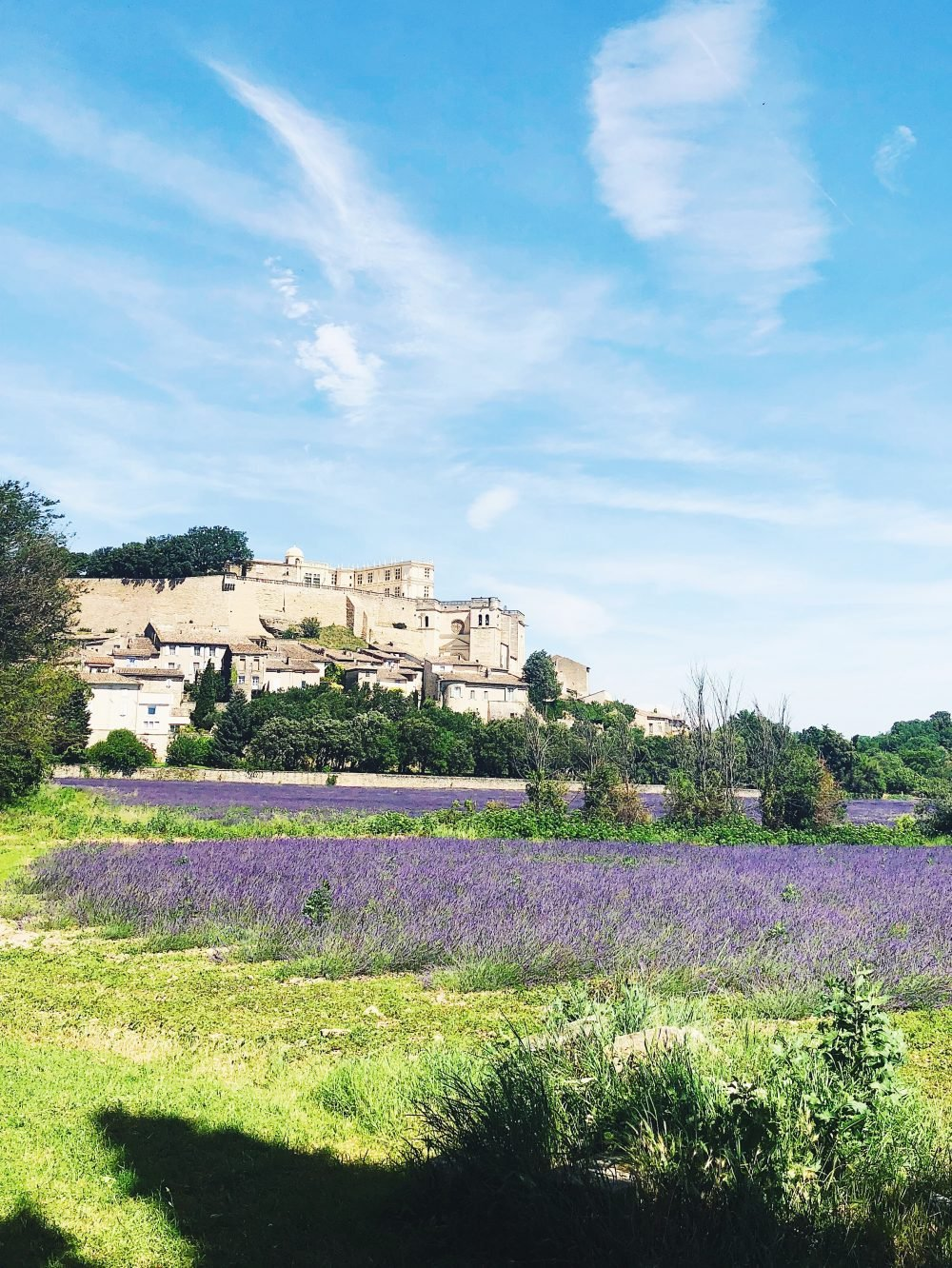 lavender field with stone buildings in the background