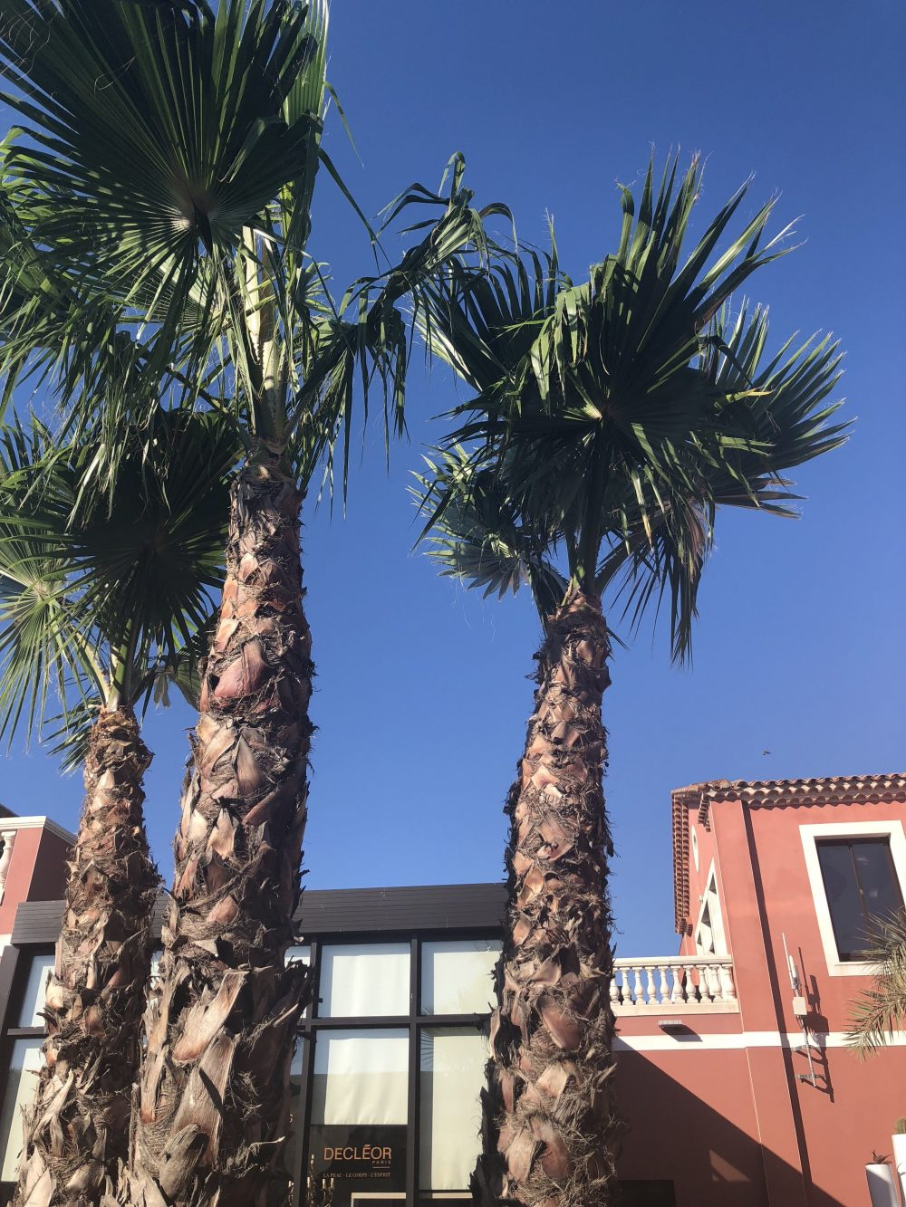palm trees next to a pink building