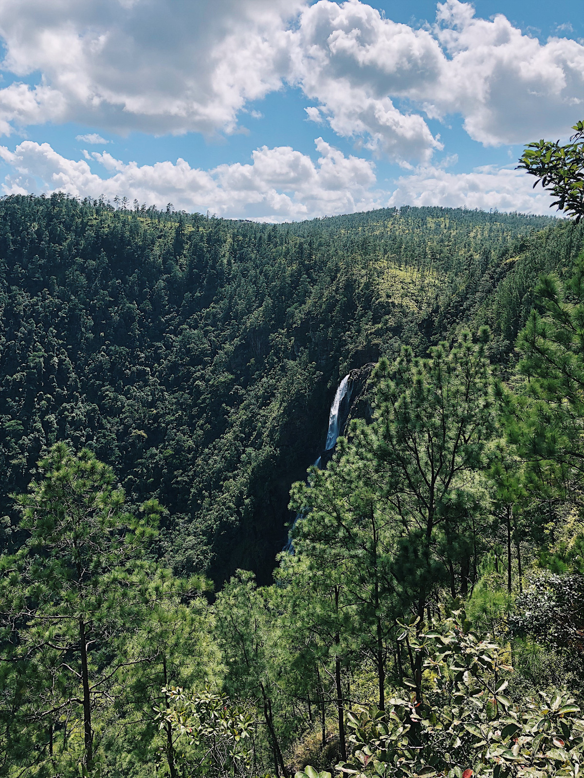 view of a forest with a waterfall in the background