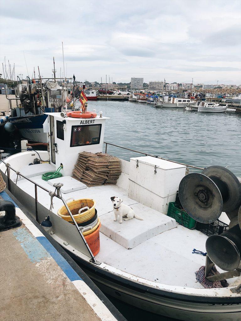 fishing boat in a harbor in spain
